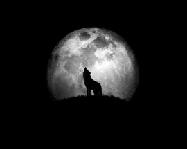 wolf-howling-moonlit-night